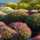 chrysanthemes la Plaine sur Mer Au Jardin des Rêves paysagiste proche Pornic